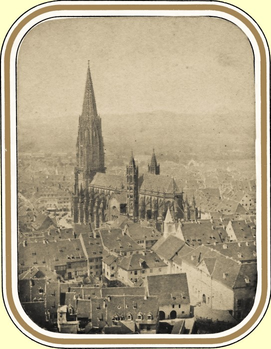 Hase Münster 02